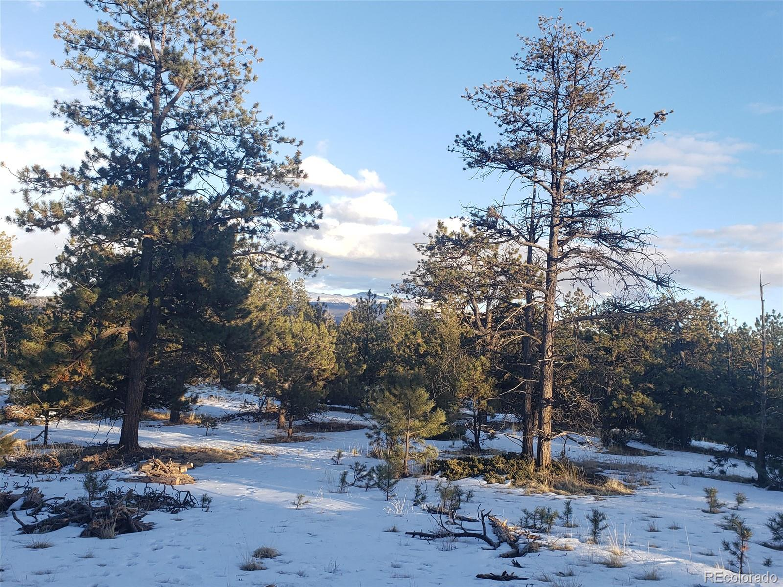 126 Rainier Drive Property Photo - Florissant, CO real estate listing