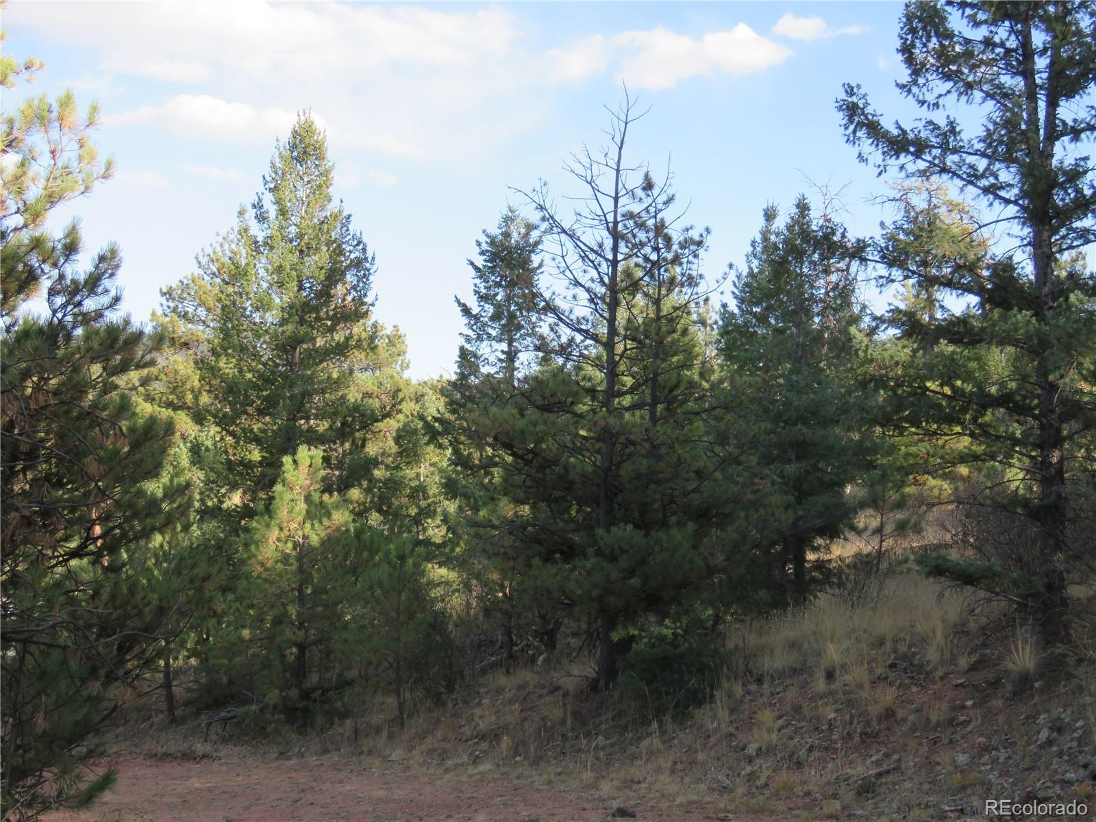 4943 County Road 11 Road Property Photo - Florissant, CO real estate listing