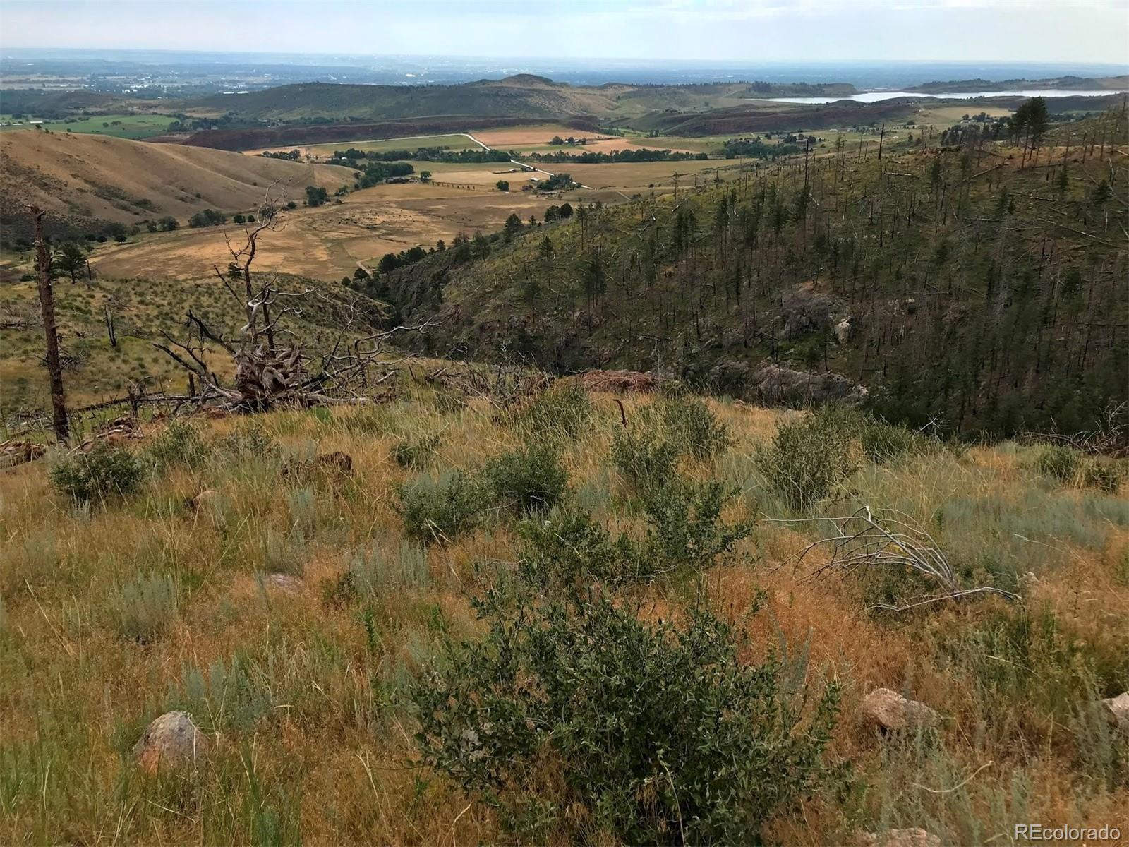 890 Hernia Hill Trail Property Photo - Bellvue, CO real estate listing