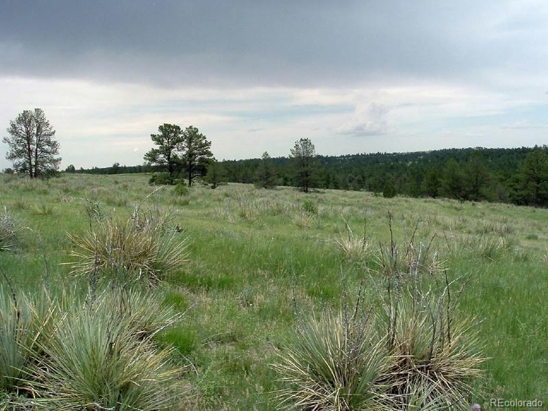23578 E Lost Creek Trail Property Photo - Agate, CO real estate listing
