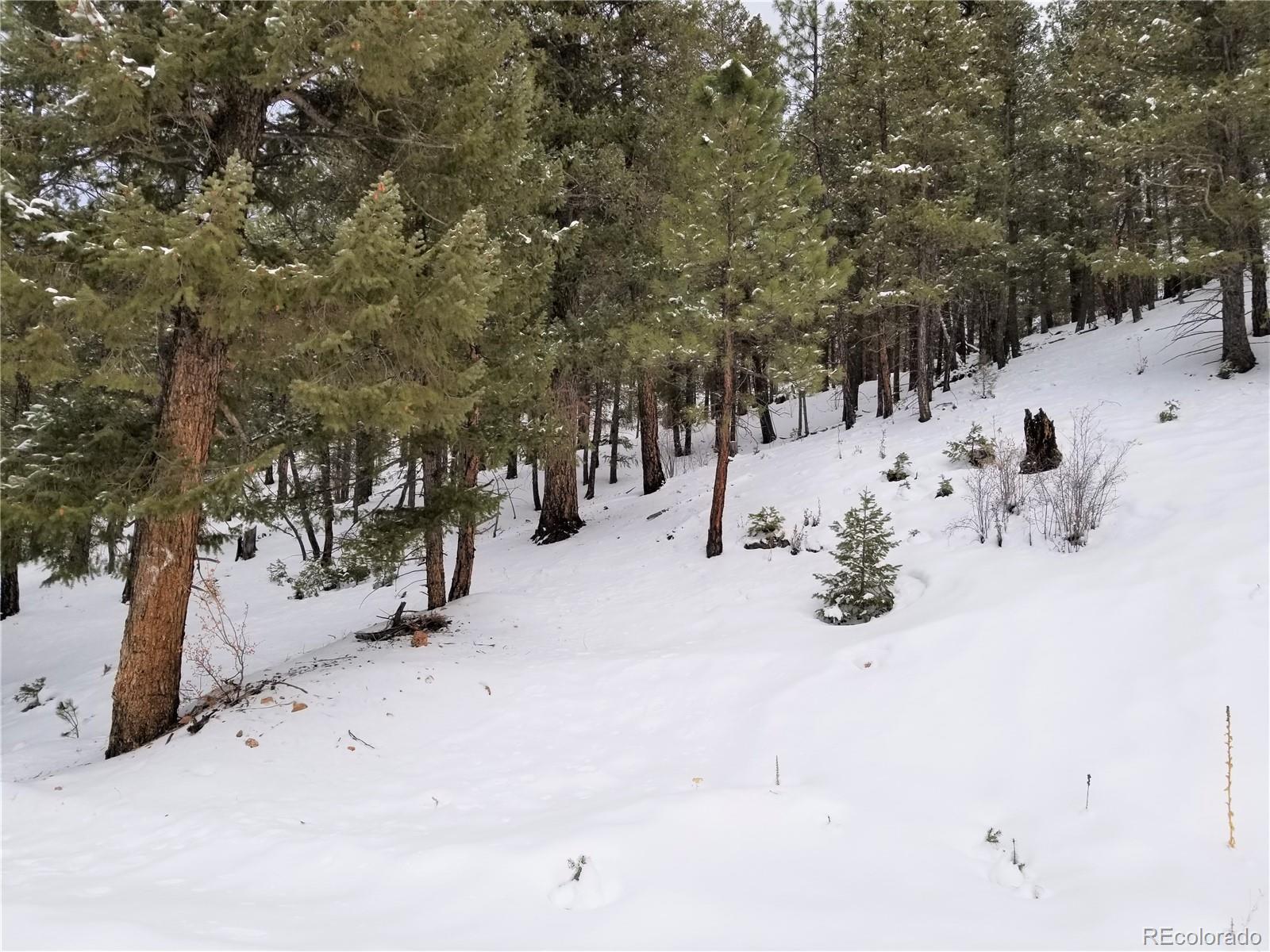28482 Crystal Ridge Road Property Photo - Pine, CO real estate listing