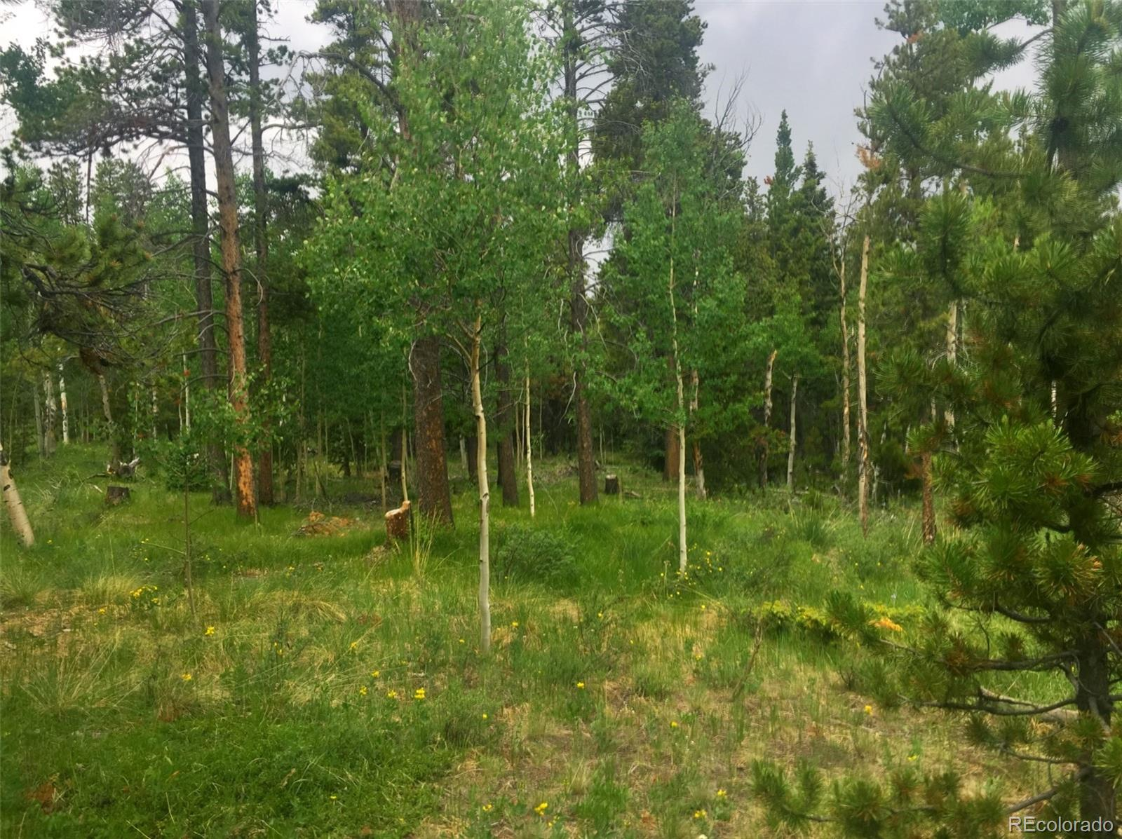 67 Rye Court Property Photo - Fairplay, CO real estate listing