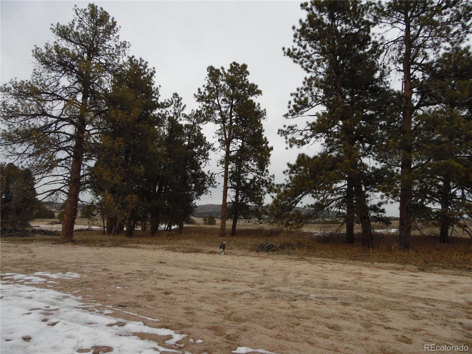 3211 Waverton Ranch Road Property Photo - Castle Rock, CO real estate listing