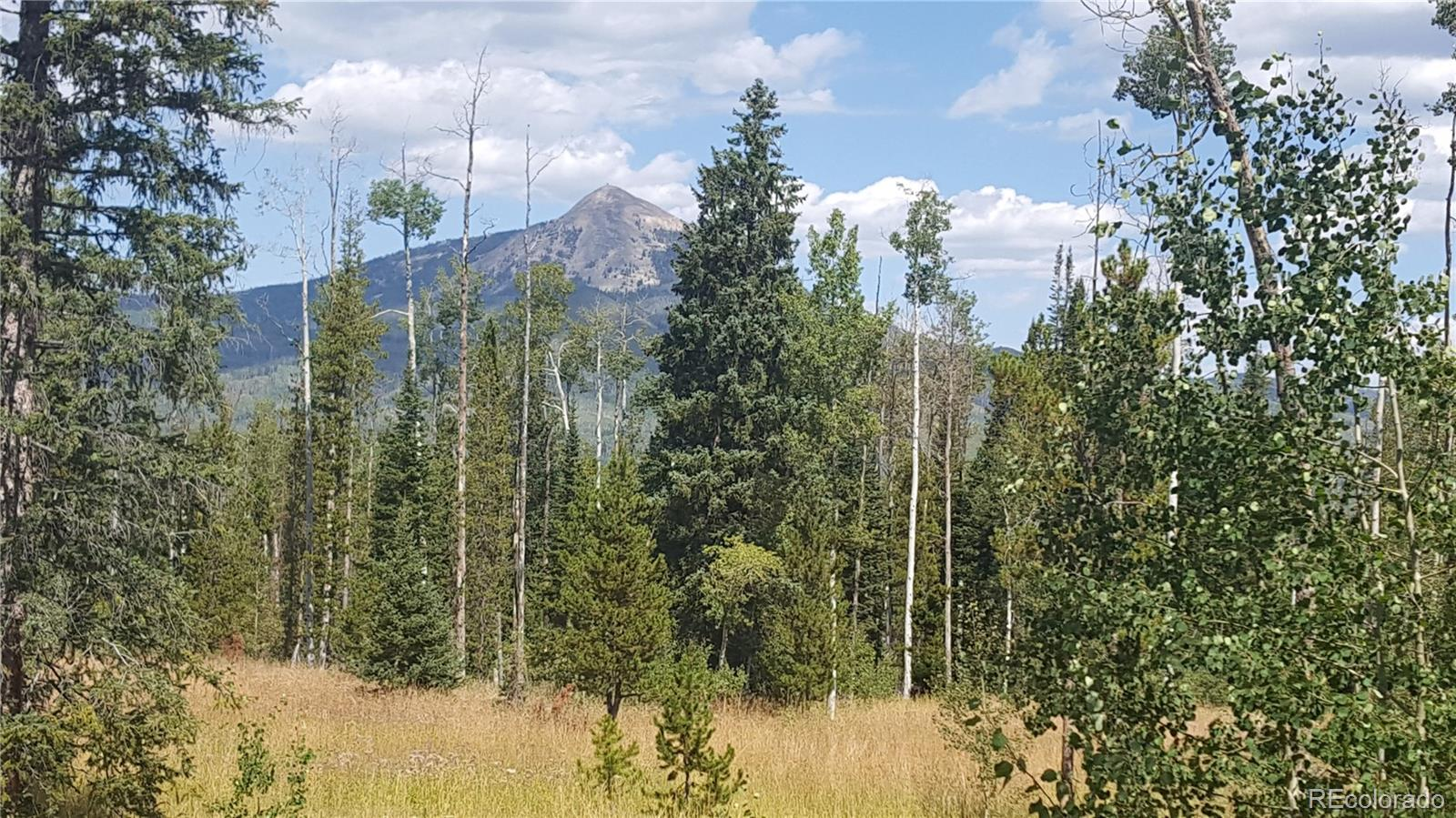 59165 Button Willow Drive Property Photo - Clark, CO real estate listing