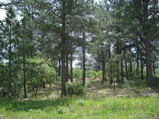 656 Silver Oak Grove Property Photo - Colorado Springs, CO real estate listing