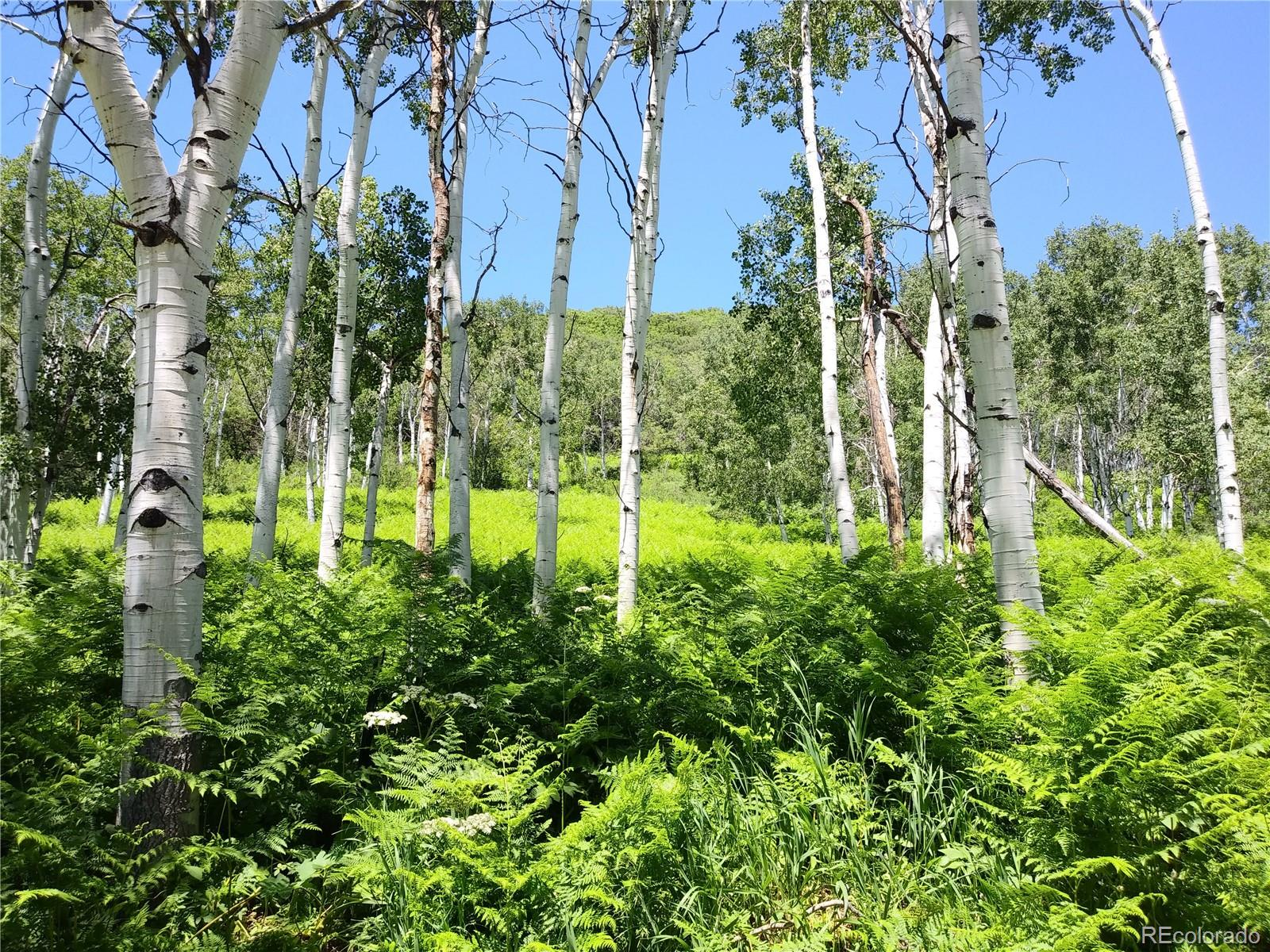 27205 Thorpe Mountain Drive Property Photo - Oak Creek, CO real estate listing
