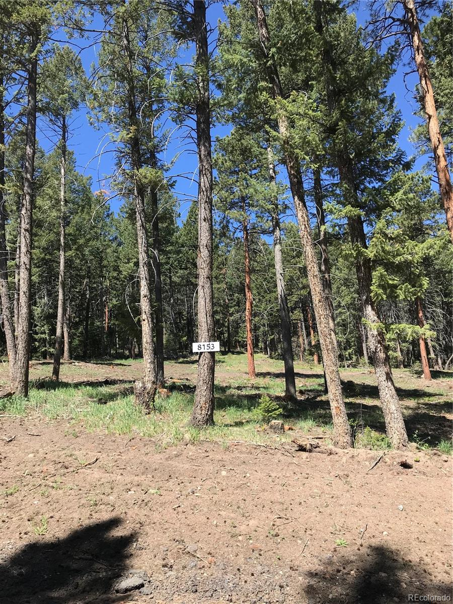 8153 Stags Leap Trail Property Photo - Morrison, CO real estate listing
