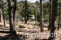 Waterfall Rd Property Photo - Manitou Springs, CO real estate listing