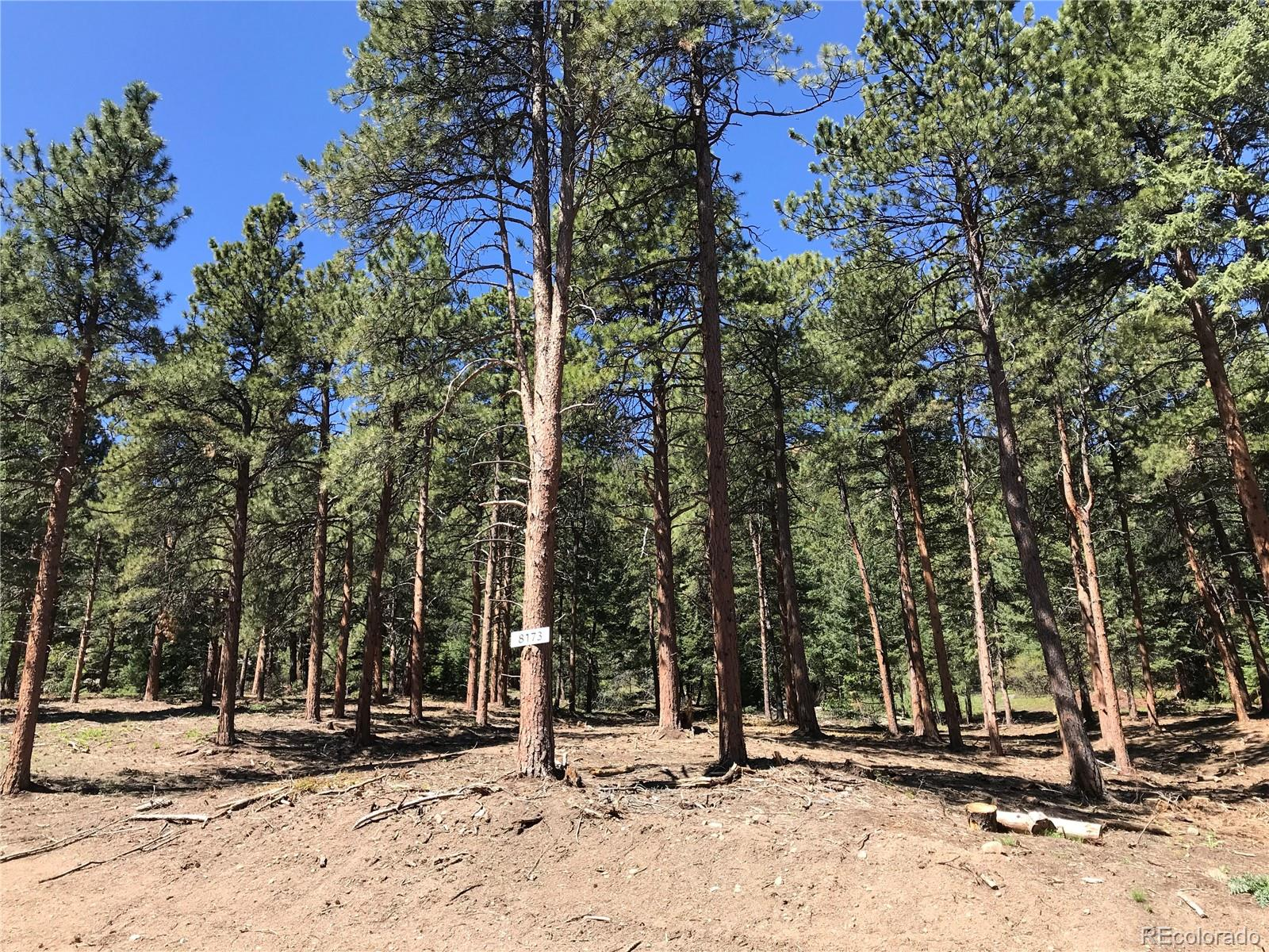 8173 Stags Leap Trail Property Photo - Morrison, CO real estate listing