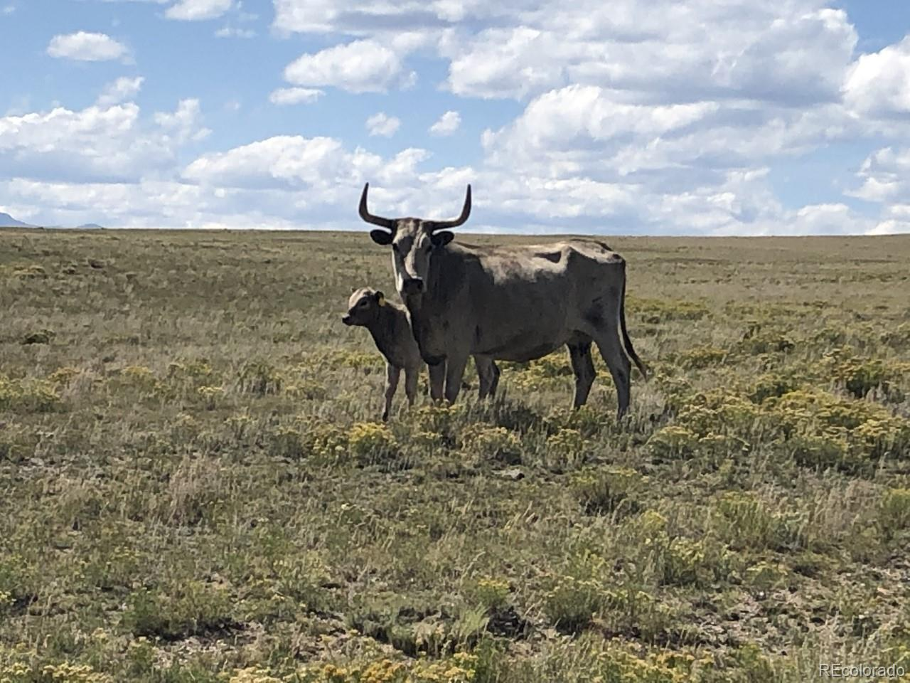 County Road 55 Property Photo - Hartsel, CO real estate listing