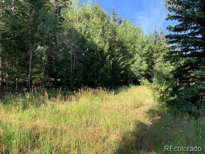 N Fork Road Property Photo - Grant, CO real estate listing
