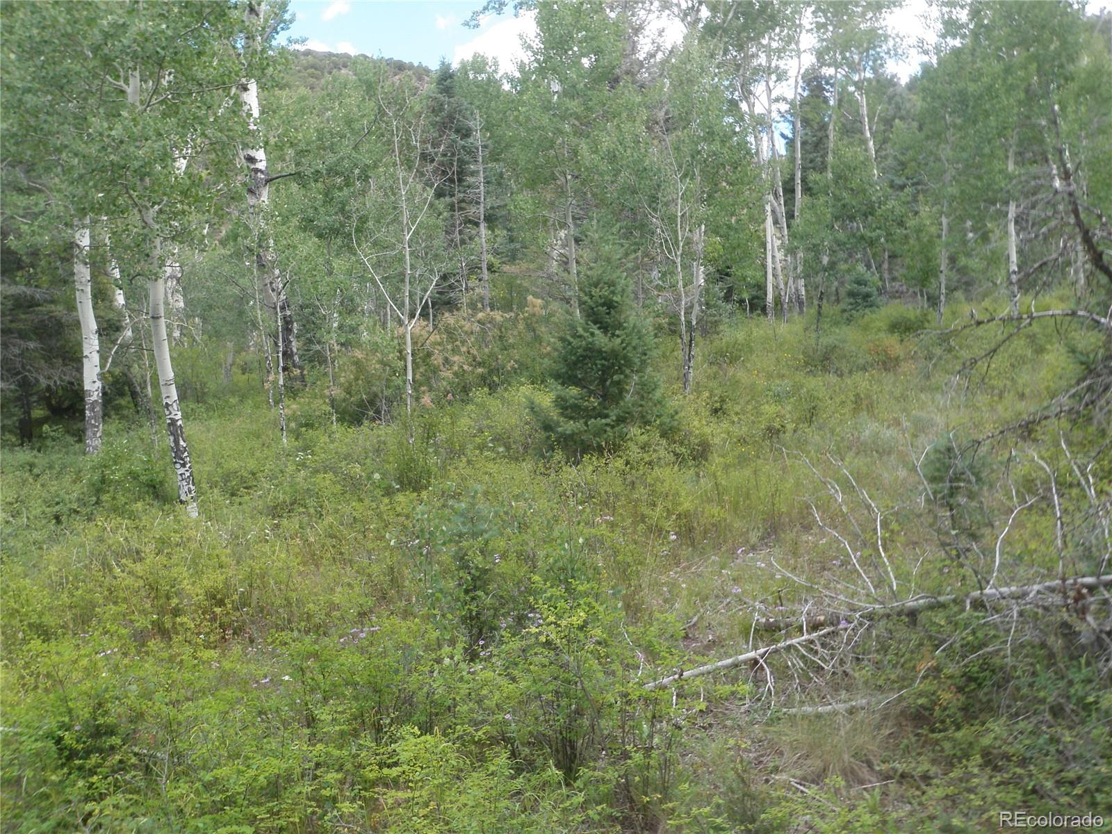 TBD Jewitt Road Property Photo - Fort Garland, CO real estate listing