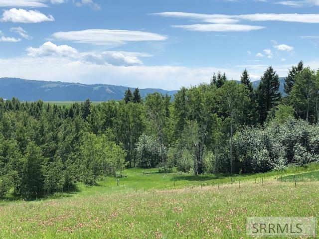 TBD Pine Creek Bench Road Property Photo - SWAN VALLEY, ID real estate listing
