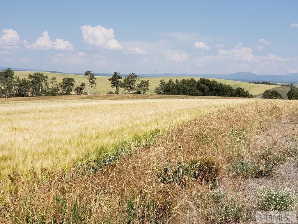 4011 Wheat Ridge Drive Property Photo - ASHTON, ID real estate listing