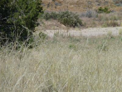 0 Tract C- LOT 5 OF FNRT Property Photo - Alcalde, NM real estate listing