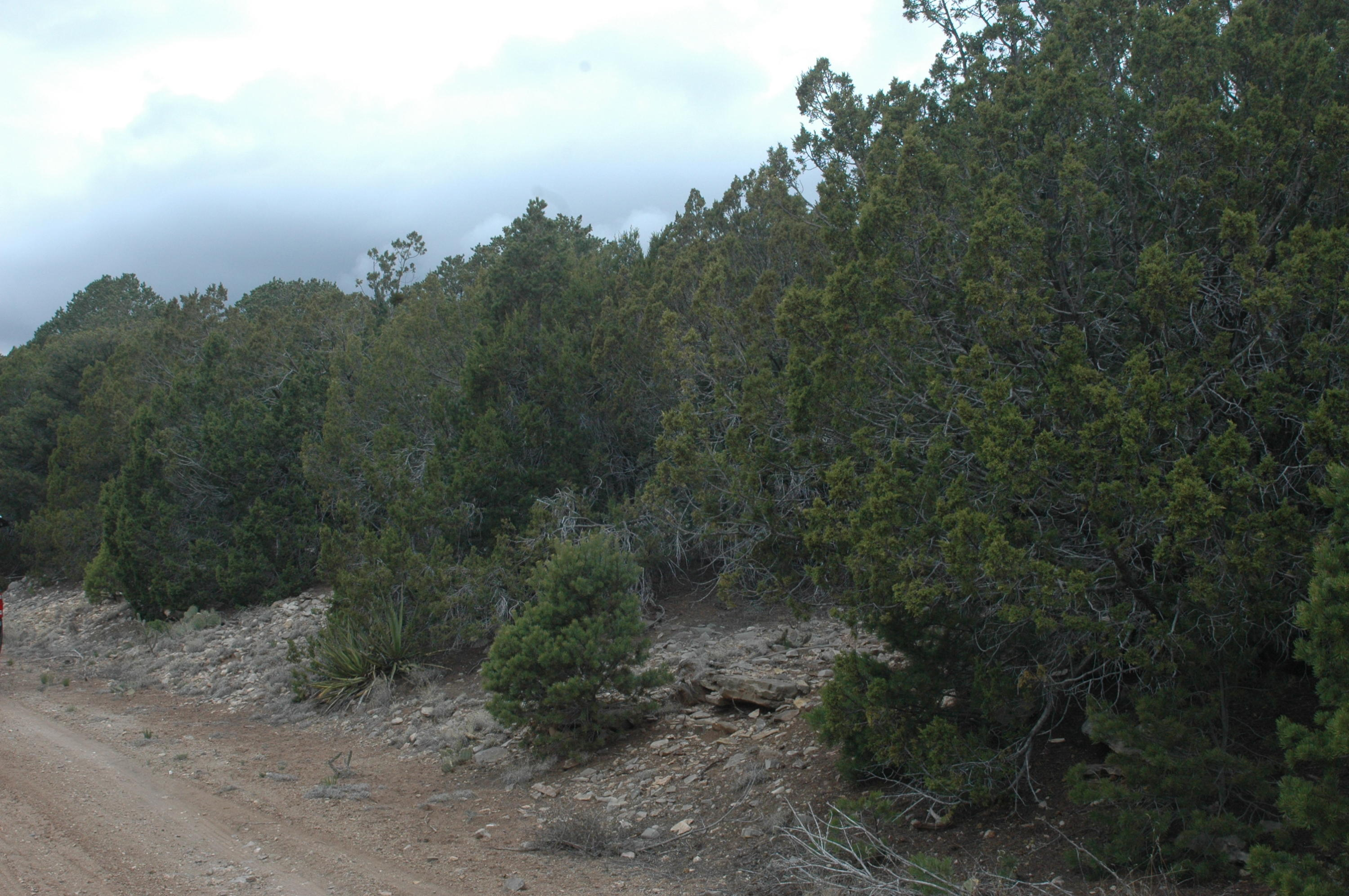 4 Enchantment View (L2,B6,FH) Property Photo - Tijeras, NM real estate listing