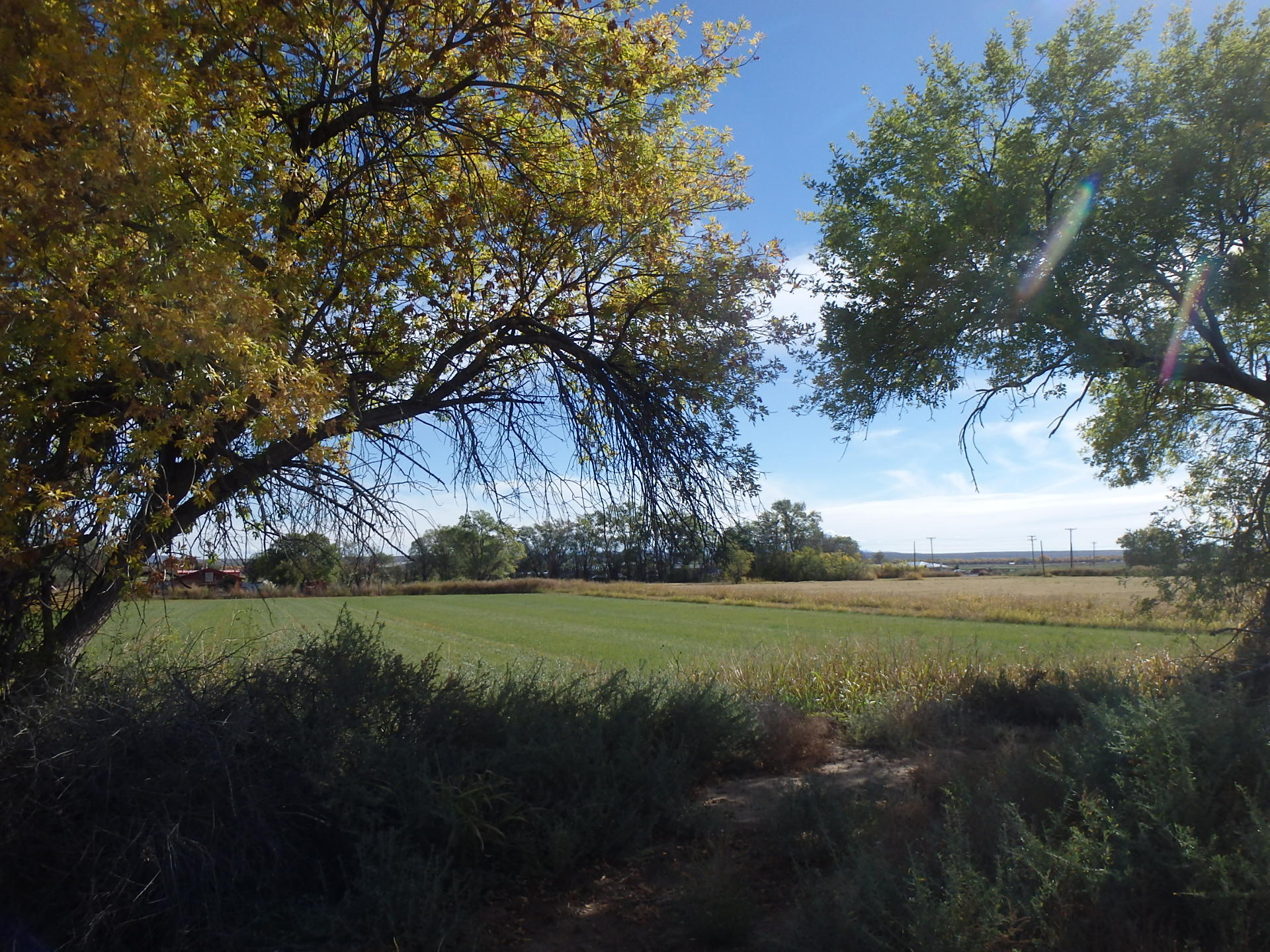 San Antonio Farm, San Antonio, NM 87832 - San Antonio, NM real estate listing