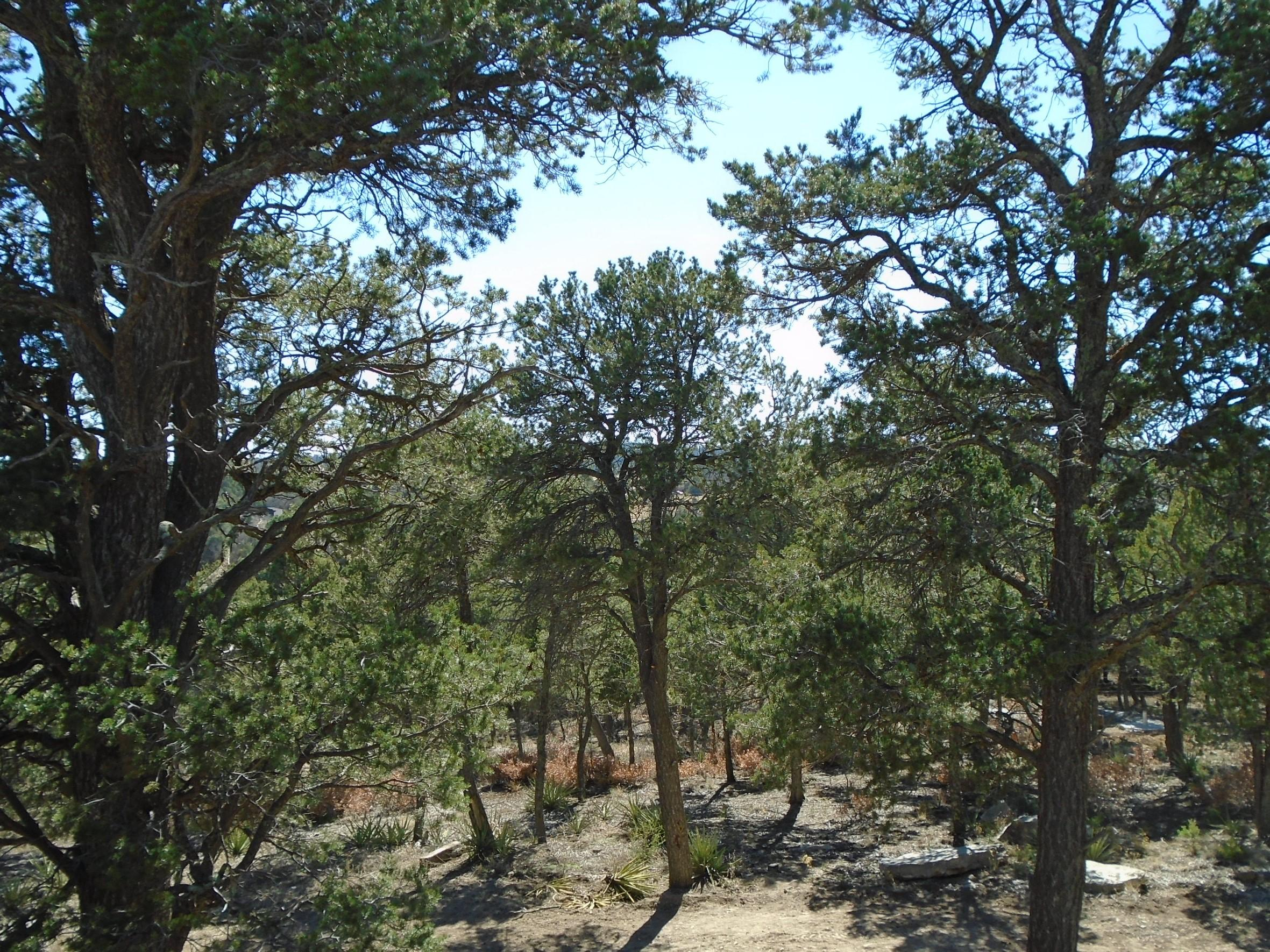 37 NM 217 Property Photo - Tijeras, NM real estate listing