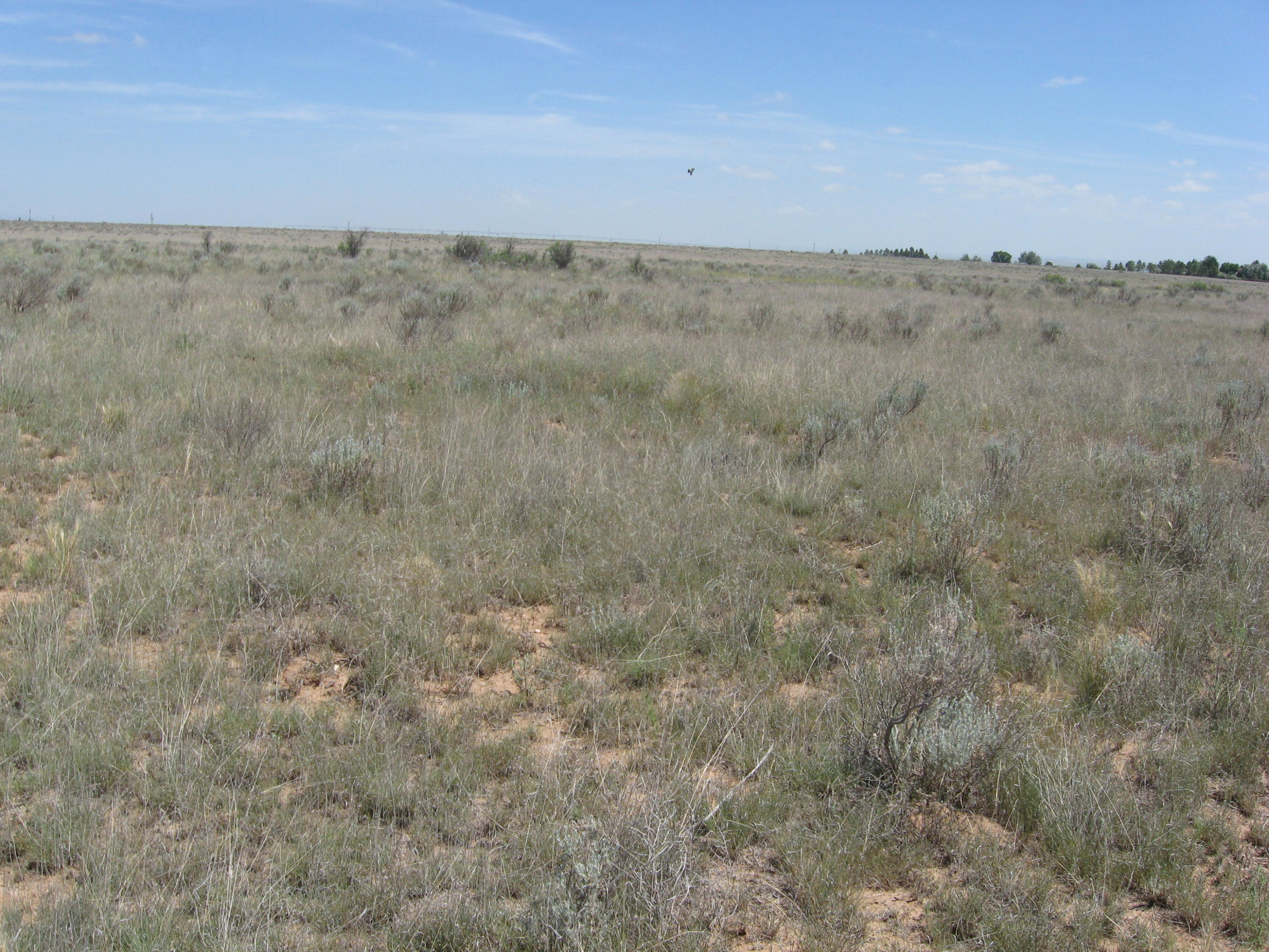 Robert Dr Property Photo - Estancia, NM real estate listing