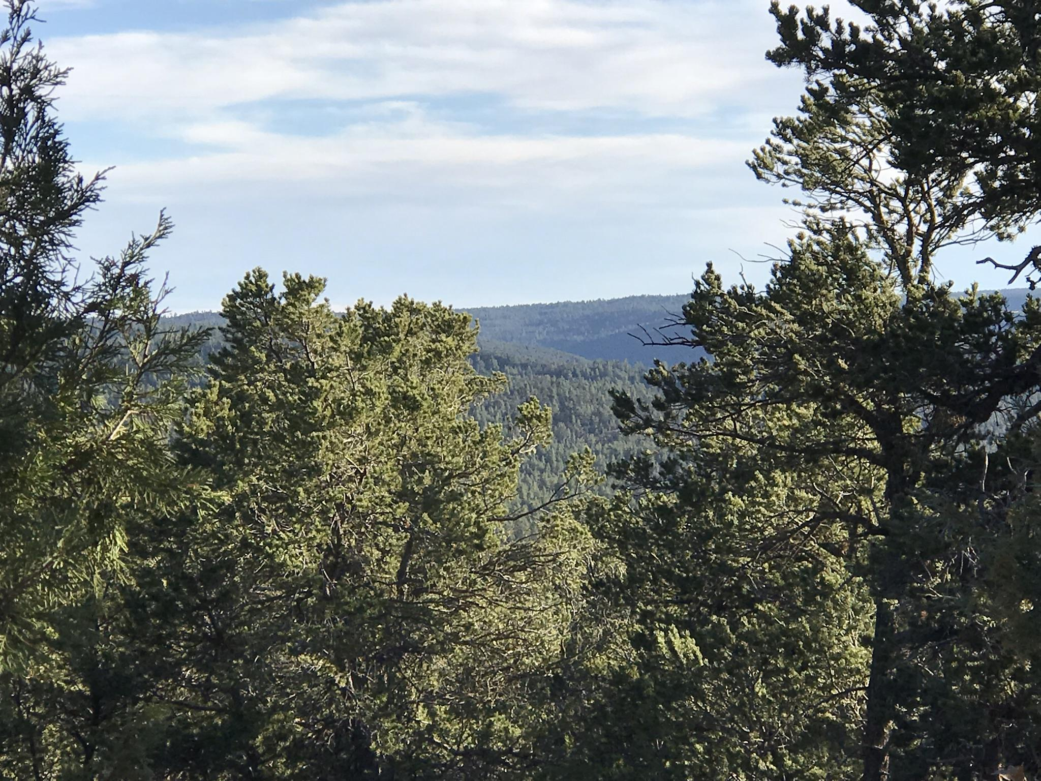 49 Andromeda Lane Property Photo - Tijeras, NM real estate listing