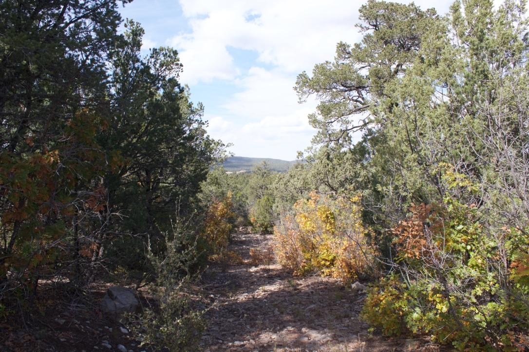 502 Juan Tomas Road Property Photo - Tijeras, NM real estate listing