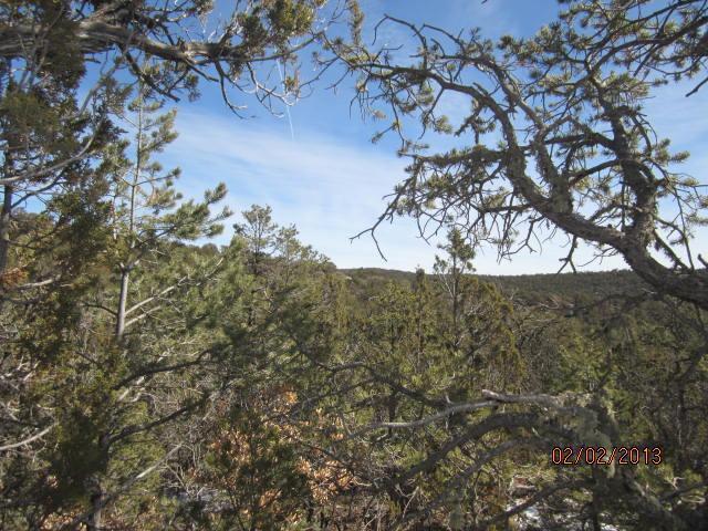 12 Twin Tree Court, Cedar Crest, NM 87008 - Cedar Crest, NM real estate listing