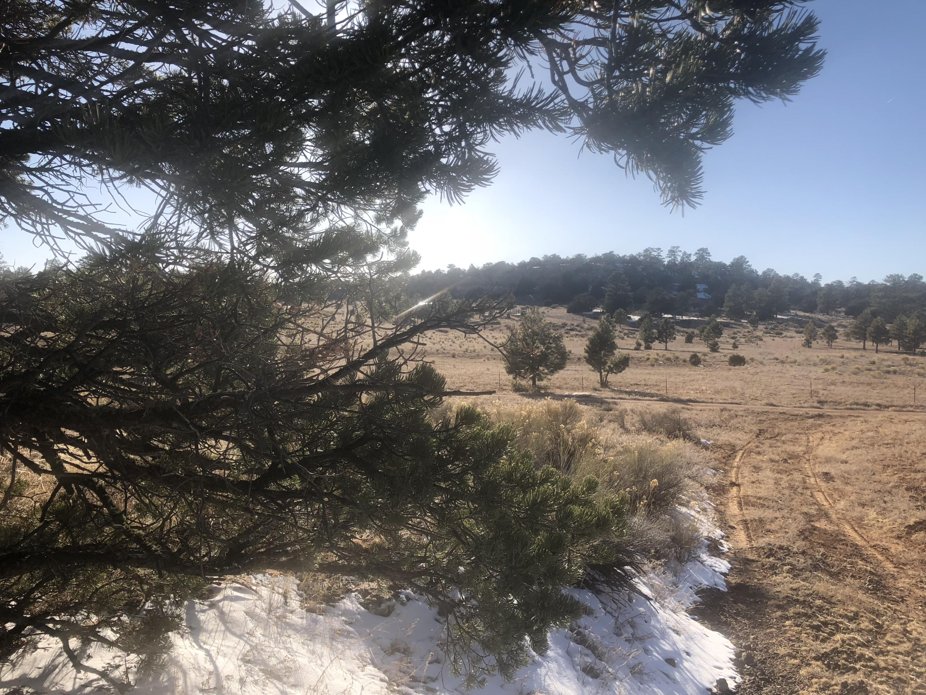 Tract 16 James Valley Ranch Property Photo - Ramah, NM real estate listing