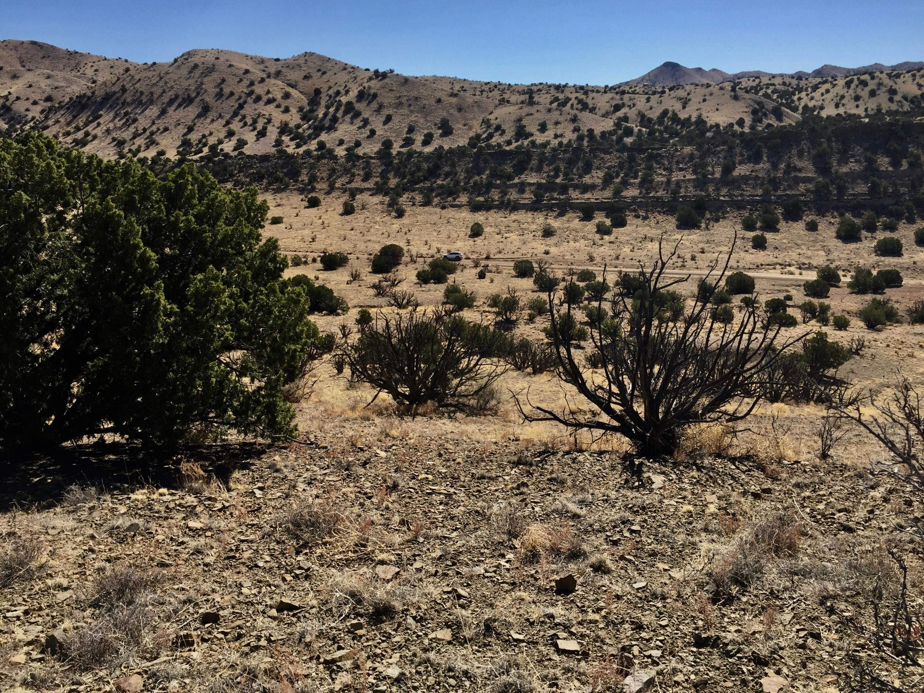 60 Forest Road 123 Property Photo - Magdalena, NM real estate listing