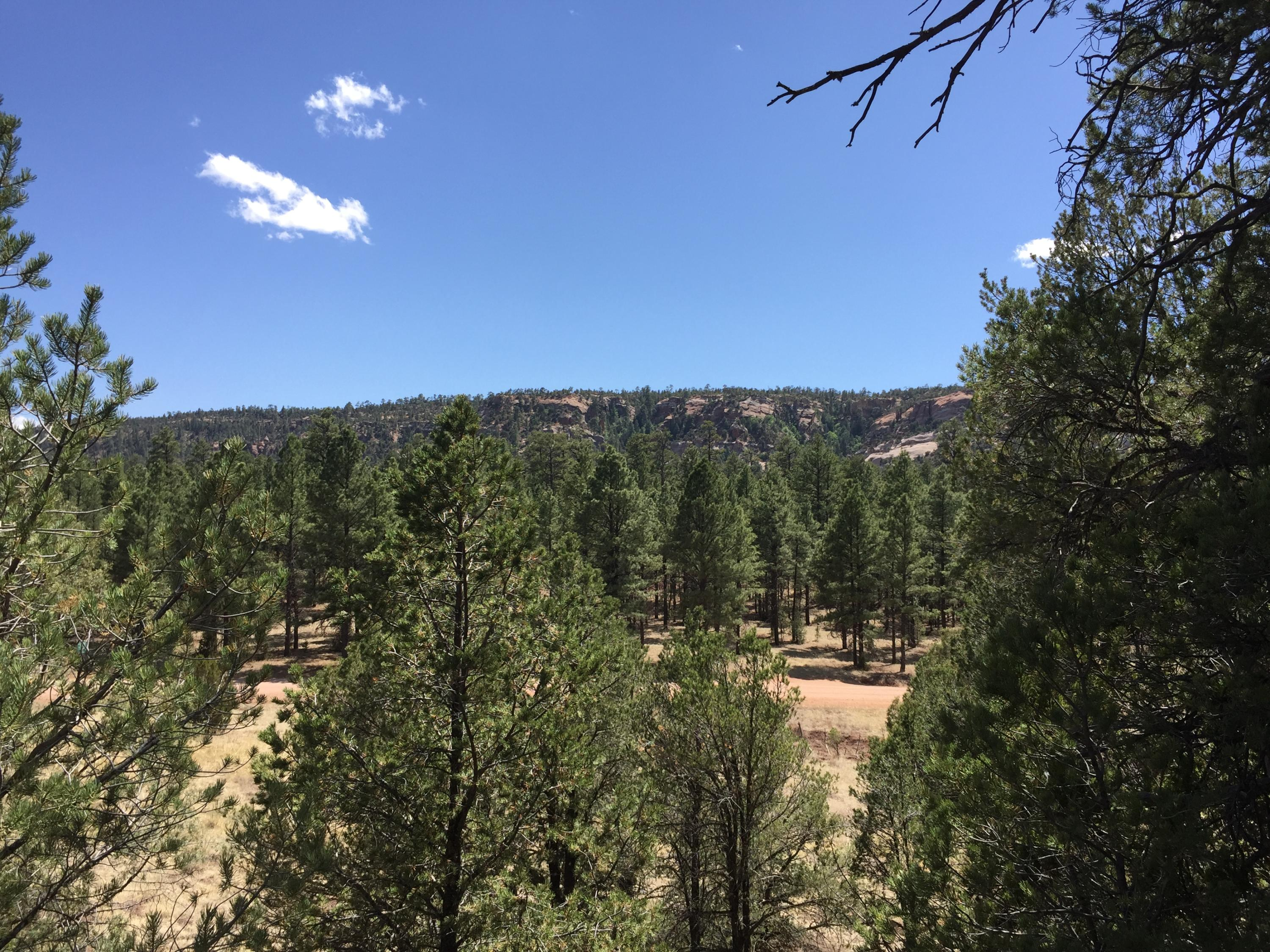 Lots 1-2 Timberlake Rd near Black Bear Road Property Photo - Ramah, NM real estate listing
