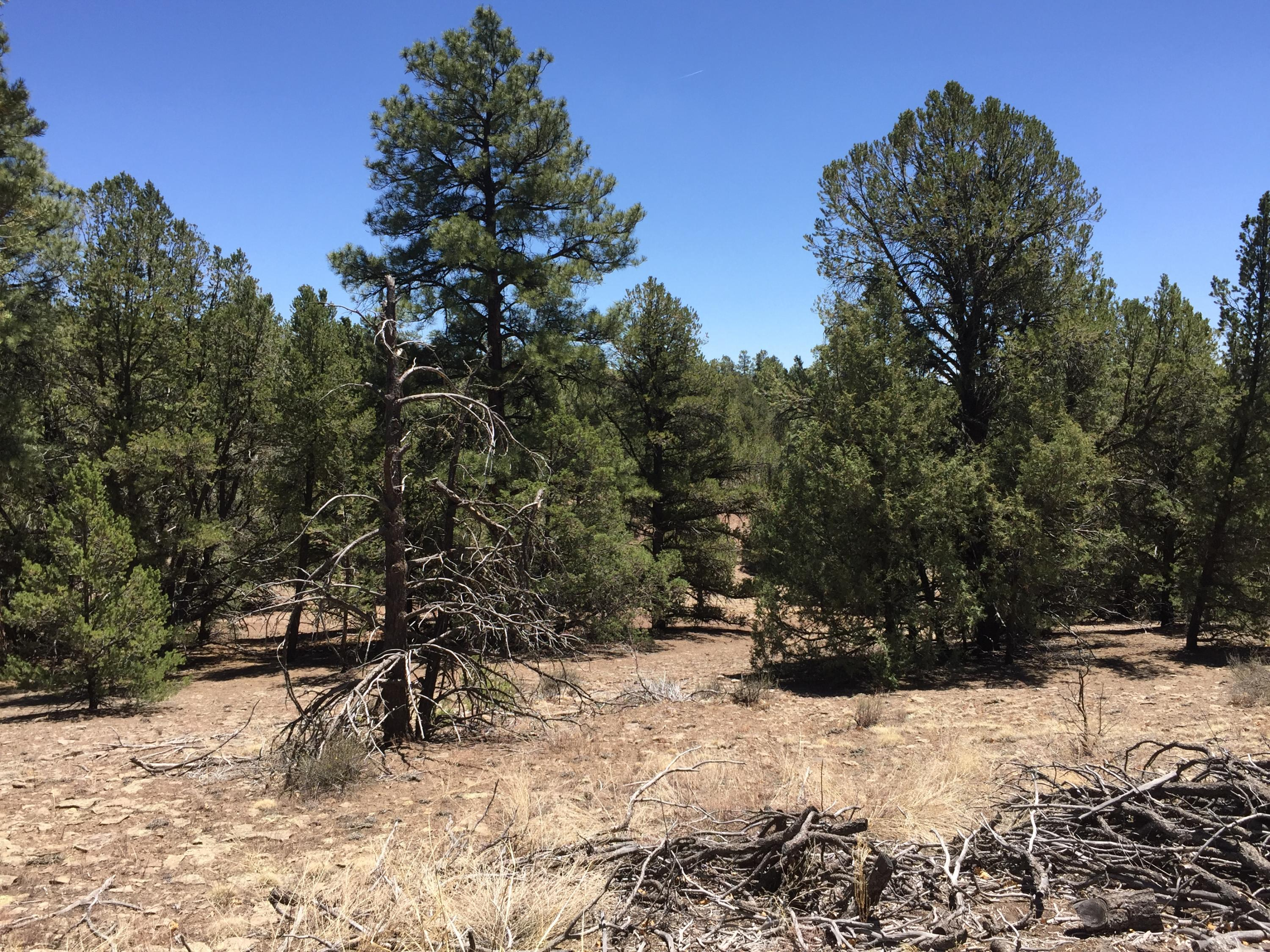 Lot 11 Fox - Timberlake Road Property Photo - Ramah, NM real estate listing