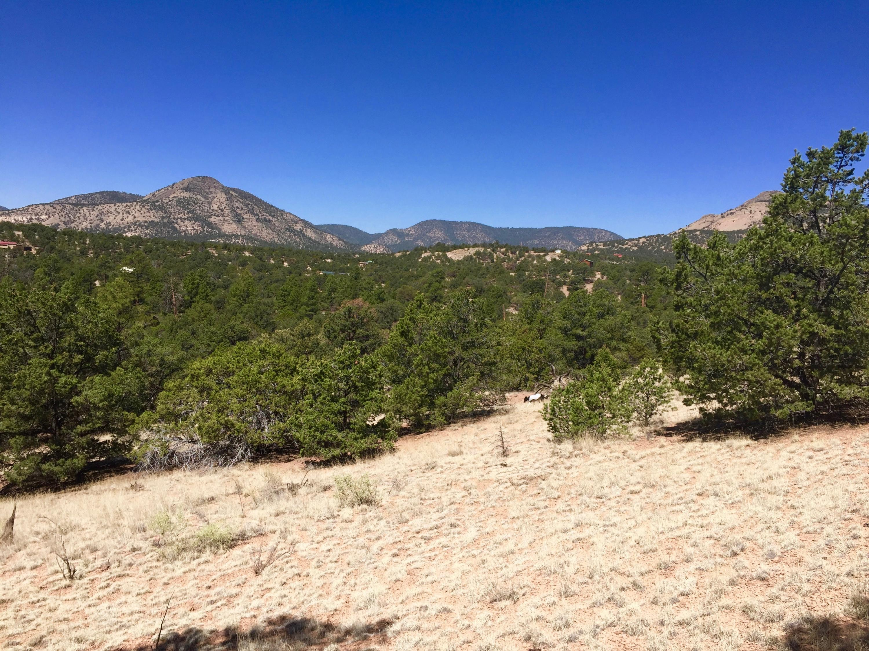 114 Homestead Property Photo - Datil, NM real estate listing