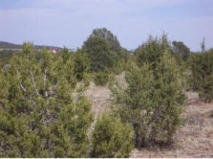 0 Lakewood Road Property Photo - Tajique, NM real estate listing