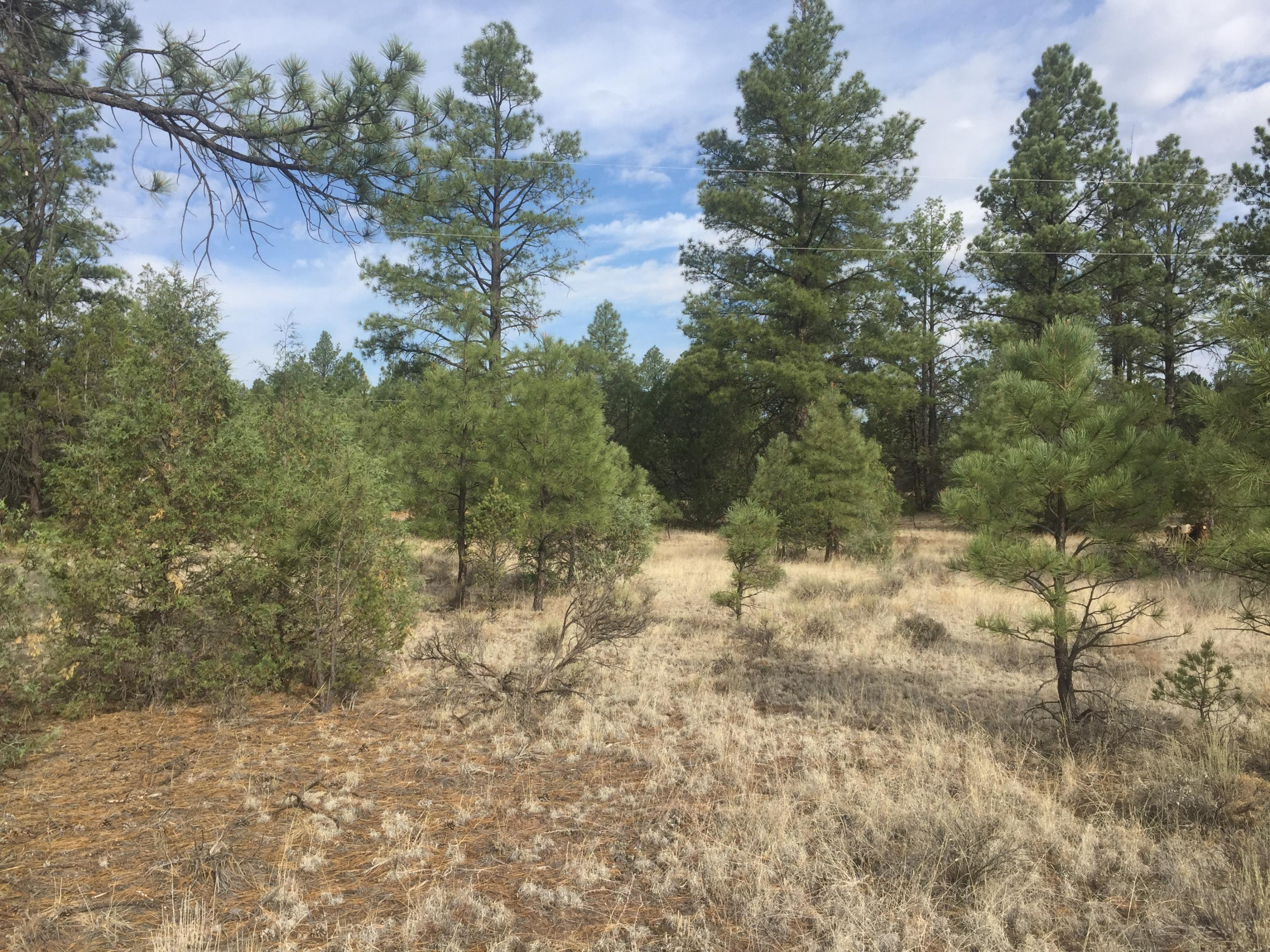 Lot 10 Pinetree Road Property Photo - Ramah, NM real estate listing