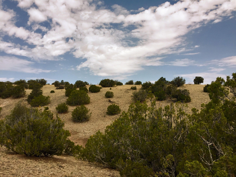 81 Pinon Springs Ranch Property Photo - Magdalena, NM real estate listing