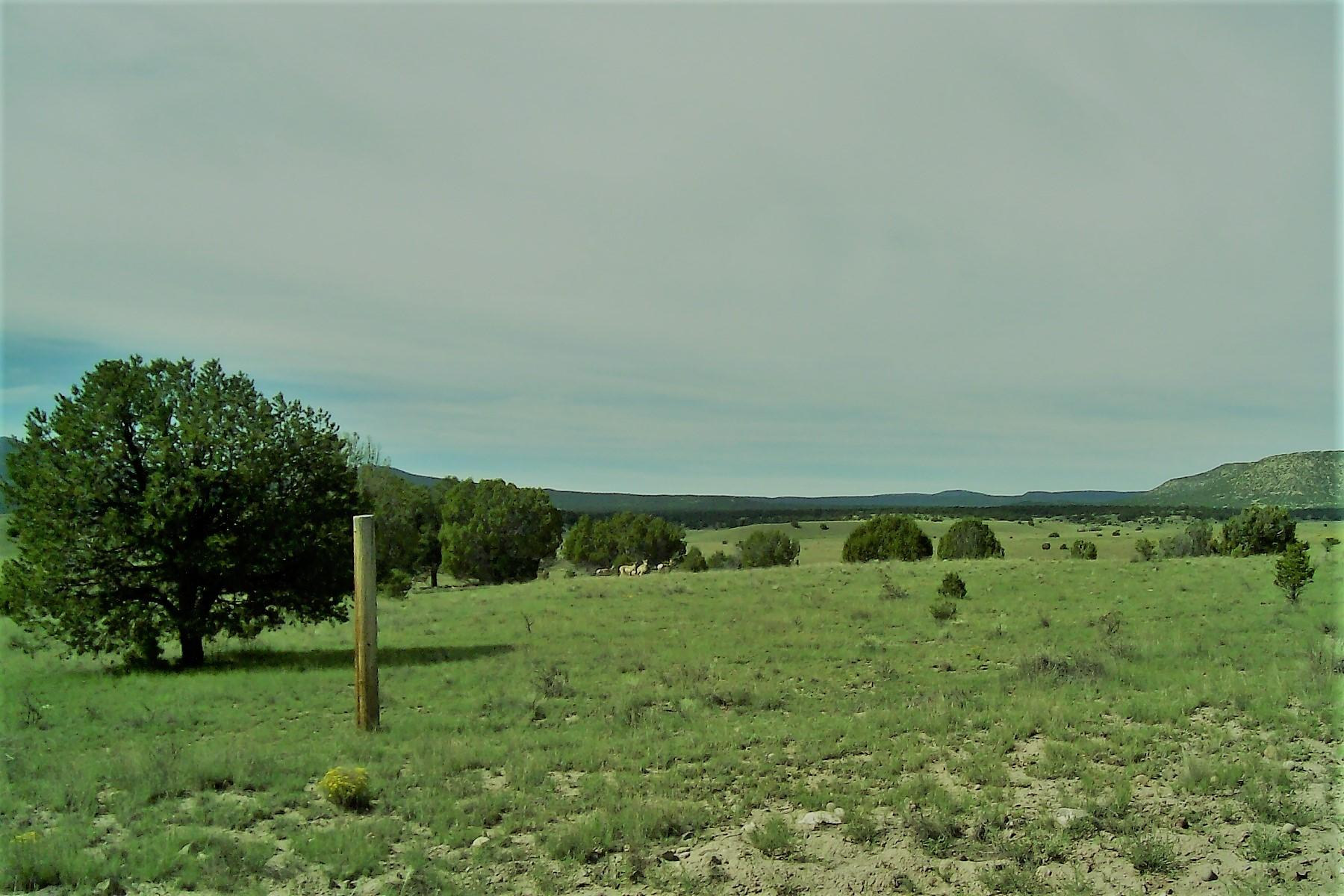 Thomas IV Road, Datil, NM 87821 - Datil, NM real estate listing