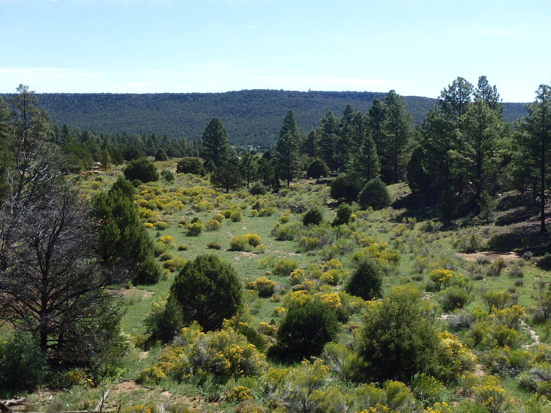 El Ocio Ranch Property Photo - Grants, NM real estate listing