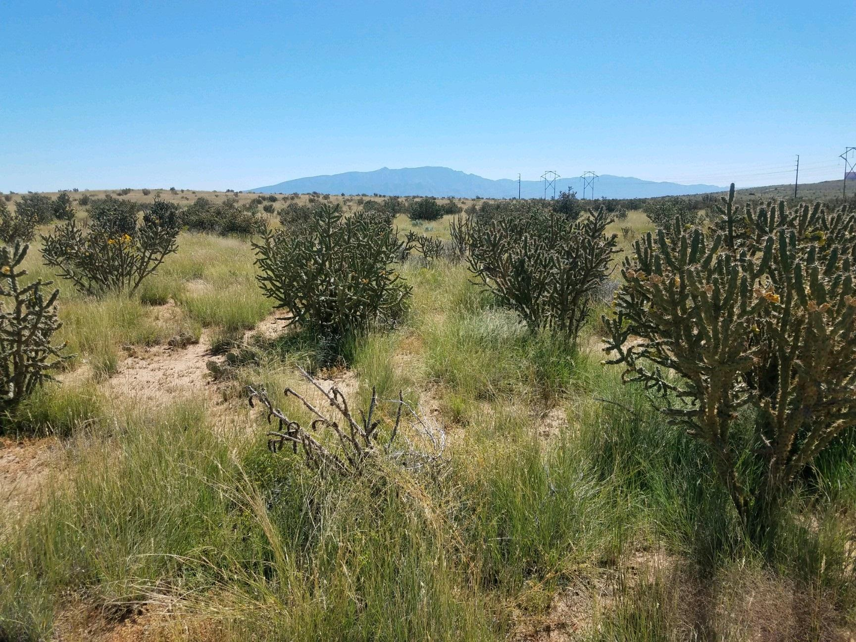 4222 15th Street NE Property Photo - Rio Rancho, NM real estate listing