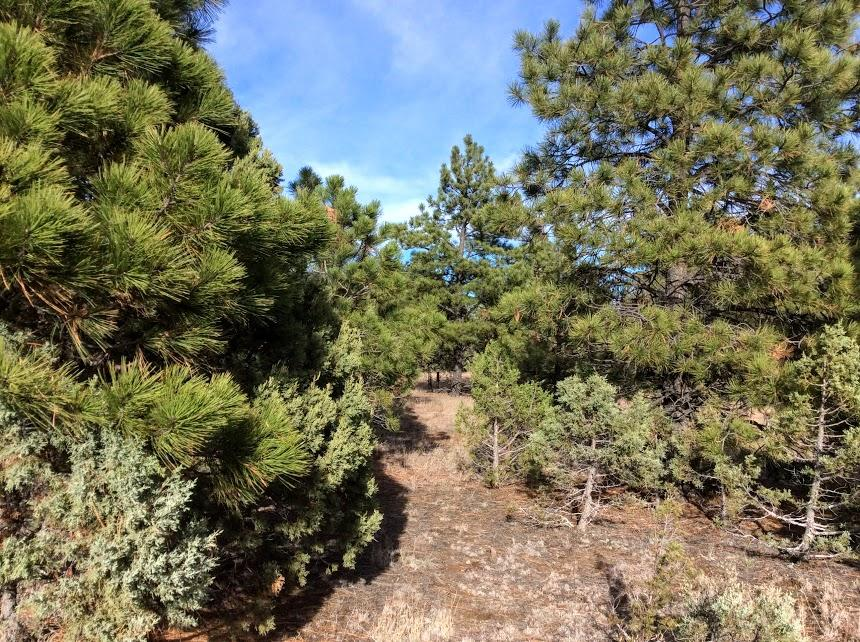 D-3 Estrella Vista Drive Property Photo - Tijeras, NM real estate listing