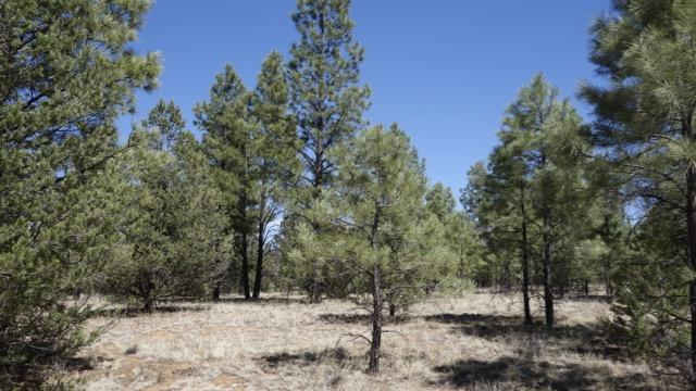 Lot 9 Sunrise Way Property Photo - Ramah, NM real estate listing