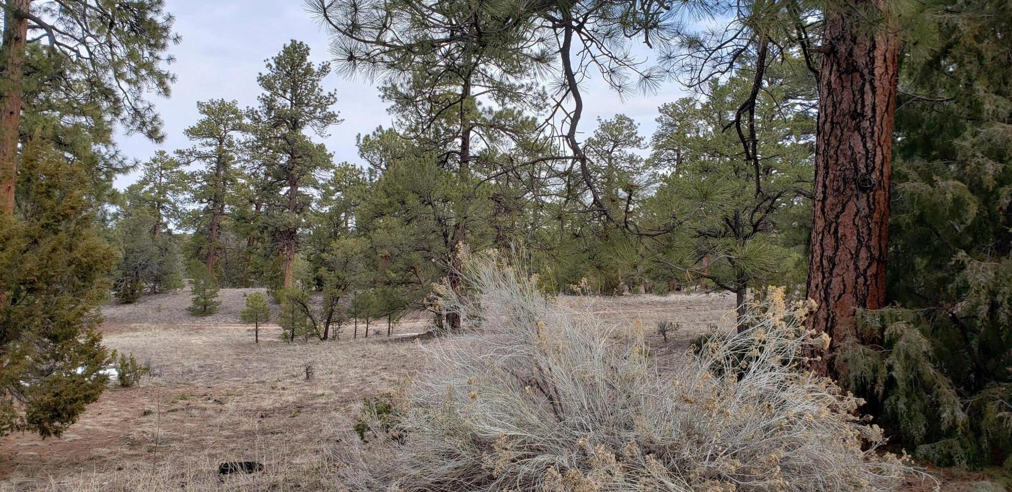 161 R Chaves Road Property Photo - Gallup, NM real estate listing