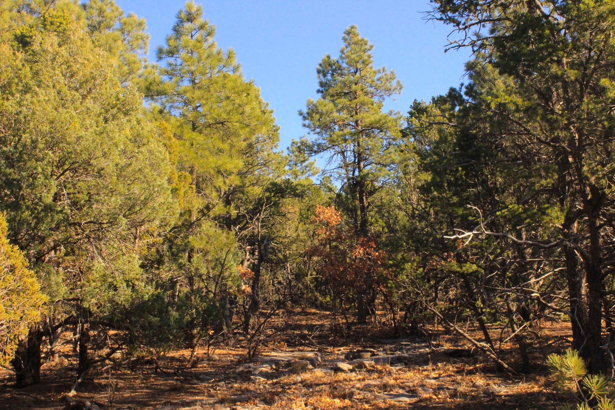 Carolino Canyon Ranch Sub Real Estate Listings Main Image