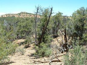 Lot 5 Skinwalker Trail Property Photo - Ramah, NM real estate listing
