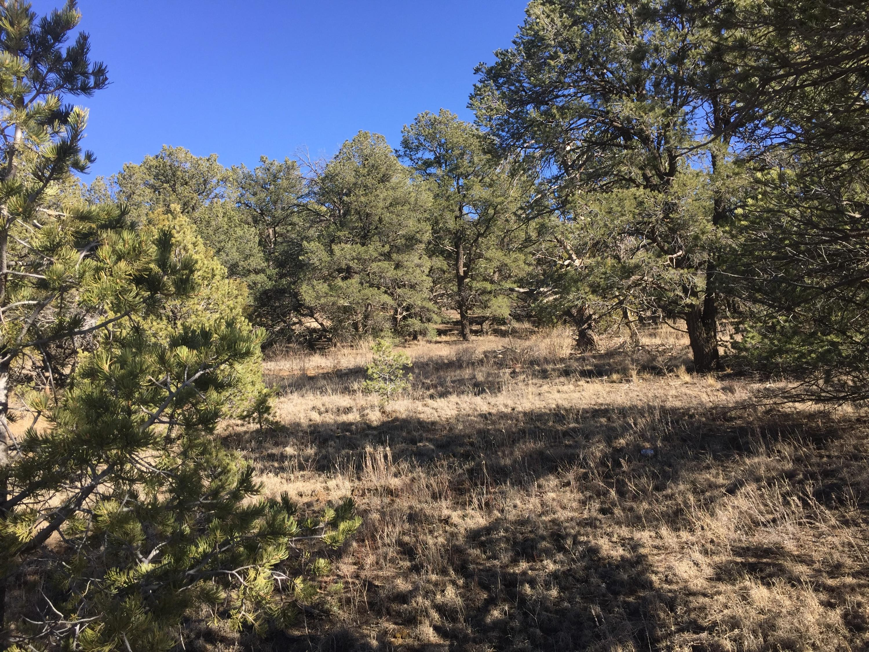 Lot 6 Coyote Canyon Property Photo - Ramah, NM real estate listing