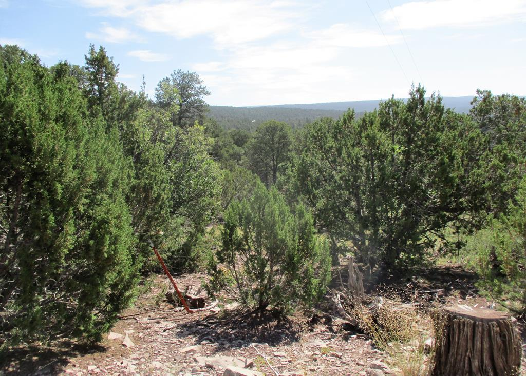 Lots 14&15 Fox Road Property Photo - Ramah, NM real estate listing