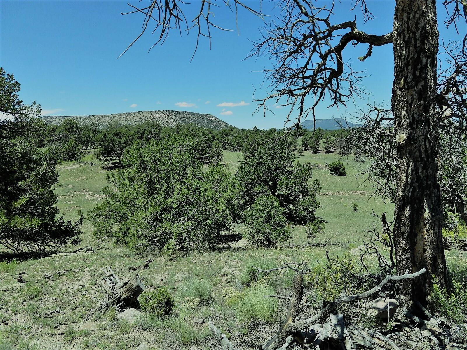 7 Borrego Drive Property Photo - Datil, NM real estate listing