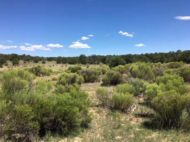 Tract 23 Choctaw Court, Pie Town, NM 87827 - Pie Town, NM real estate listing
