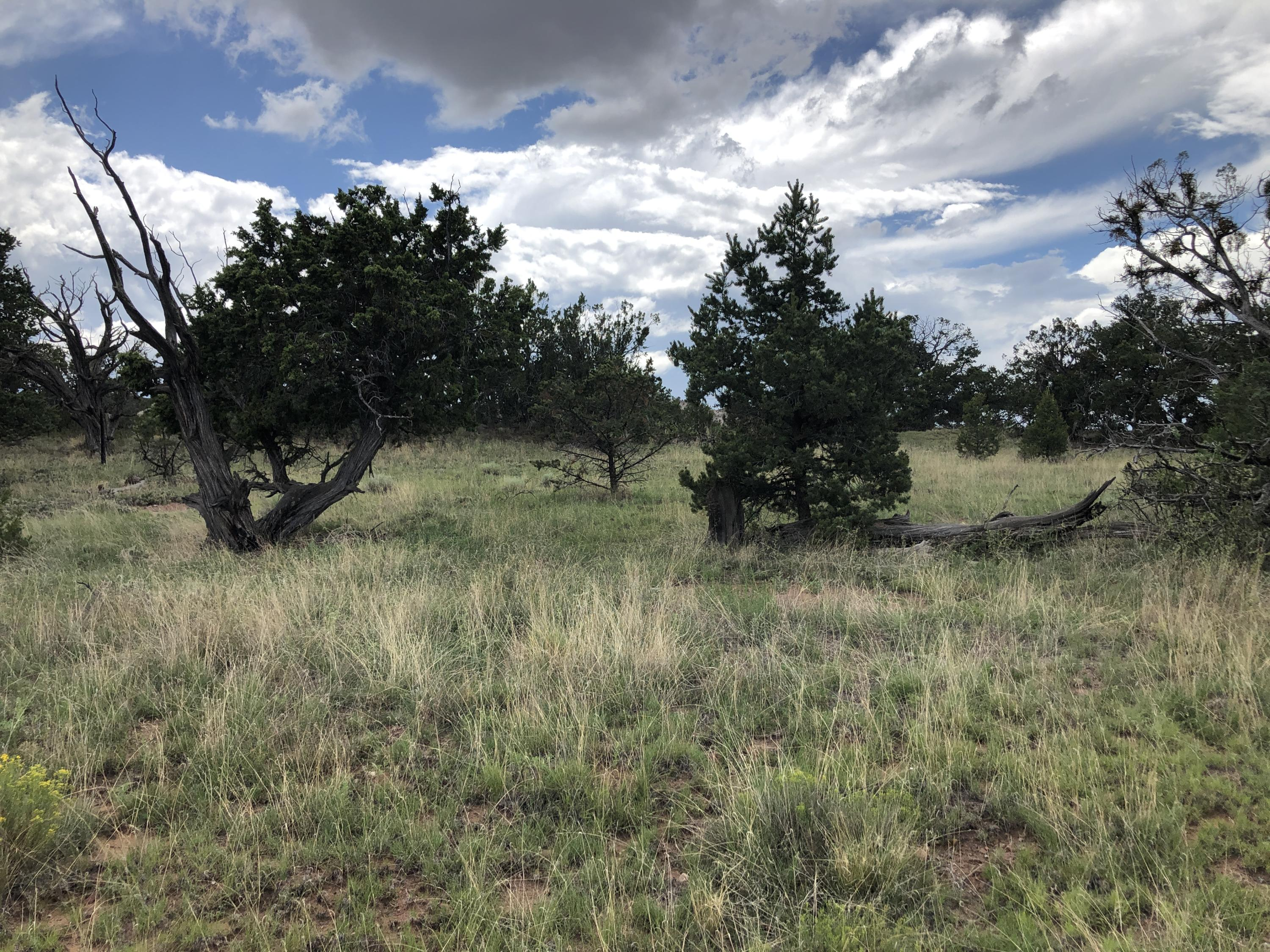 Tract 2-B Horse Springs Road, Pie Town, NM 87827 - Pie Town, NM real estate listing