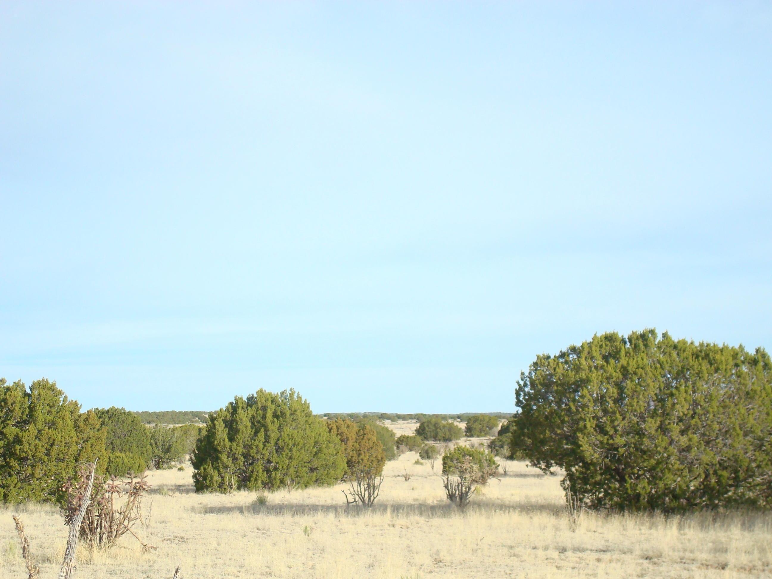 Thompson RD Property Photo - Bernardo, NM real estate listing