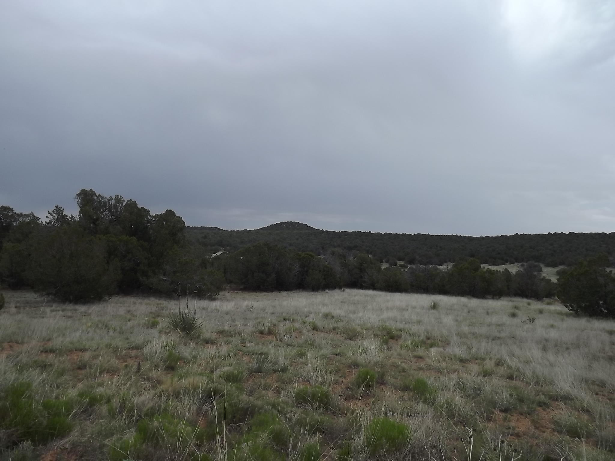 Camino del Norte Property Photo - Tajique, NM real estate listing