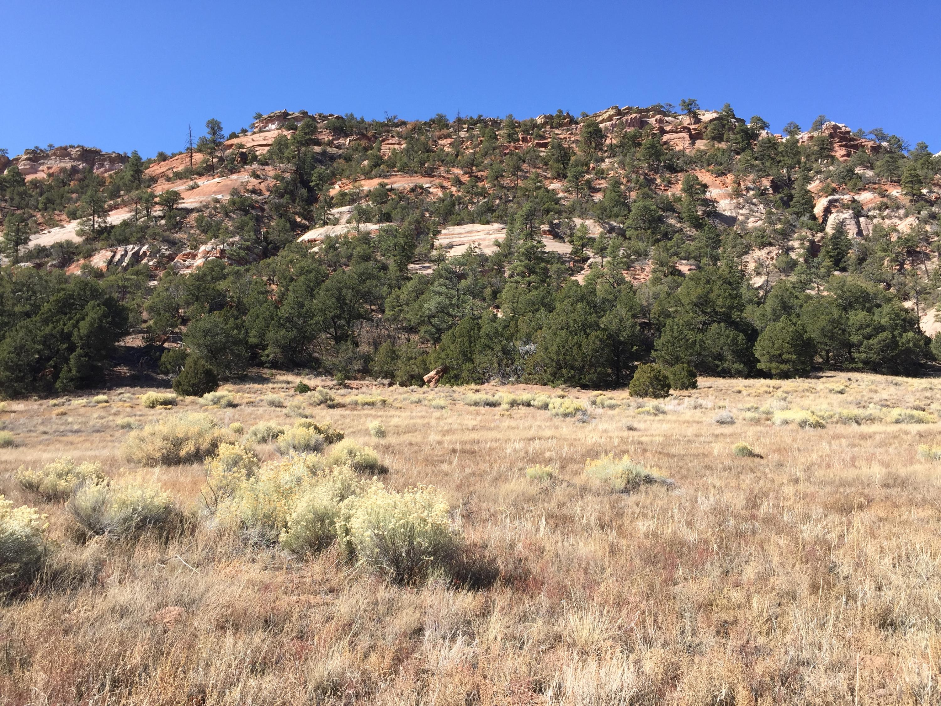 Lot 3 Box S Ranch Road Property Photo - Ramah, NM real estate listing